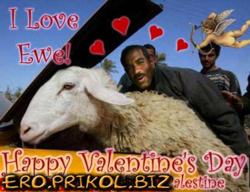 секс животных баран с овцой