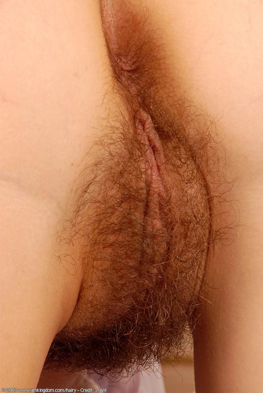 Фото волосатых женских кисок 23555 фотография